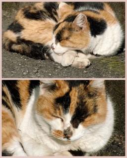 ねむり猫.jpg