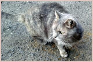 べっぷ猫-001.jpg