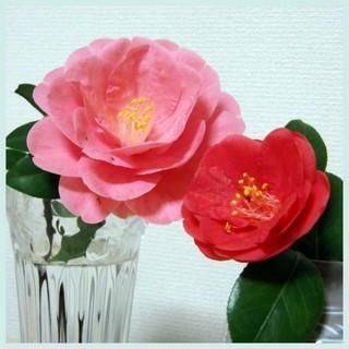 ローズピンクとコーラルピンク.jpg